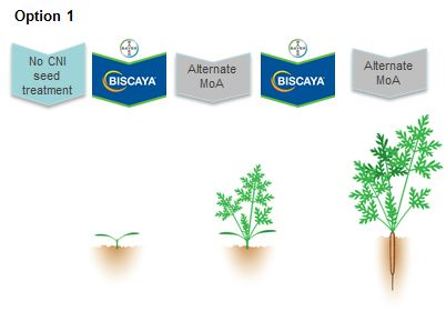 Willow-carrot aphid: effective control in a challenging year