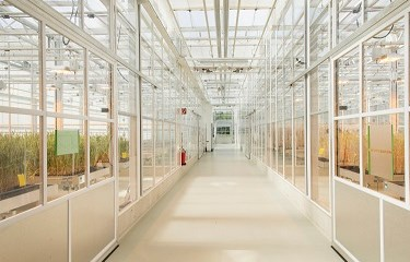 Greenhouse - Bayer Crop Science