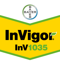 InVigor 1035 - Bayer Crop Science Seed