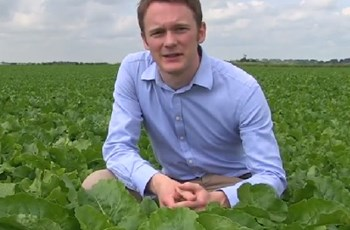 Bayer Crop Science - Sugar beet