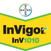 Bayer Crop Science - Seeds Invigor 1010