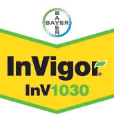 InVigor 1030 - Bayer Crop Science Seed