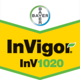 InVigor 1020 - Bayer Crop Science Seed