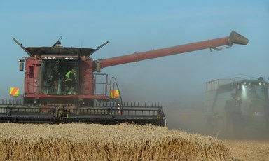 How to Grow a Record-Breaking Wheat Crop: Expert Q&A