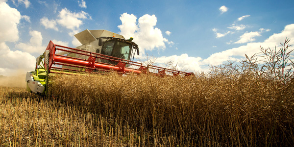 Oilseed rape - The Big Picture - Bayer Crop Science