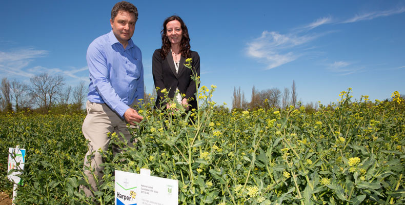 oilseed rape performance