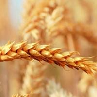 cropscience.bayer.co.uk